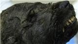 Phát hiện một chú chó thời tiền sử đóng băng từ 18.000 năm trước