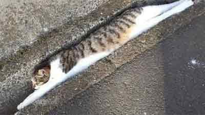Những bức ảnh chứng minh mèo ở dạng thể lỏng, có thể 'chảy' gọn vào bất kỳ nơi đâu