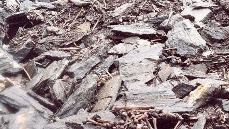 Thiên nhiên kì bí: Bí mật 'vùng đất chứa 800 bộ hài cốt' và loài nấm ma thuật kinh dị nhất mọi thời đại