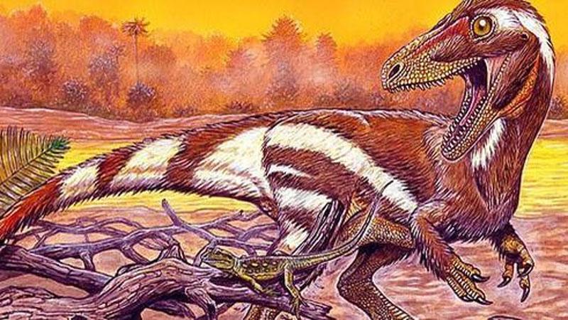 Khai thác đá, đụng độ tổ tiên 'quái thú' không cánh và hung ác của loài chim