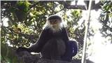 Phát hiện những động vật quý hiếm nào ở Kon Tum?