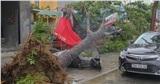 Bão số 5 gây gió to, mưa lớn, nhiều cây xanh tại TP. Huế đổ ngổn ngang