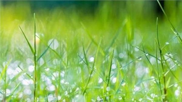 Tử vi tuần mới 23/11 - 29/11: Tuổi Sửu thăng trầm bất định, tuổi Mão quý nhân dẫn đường