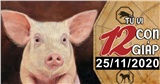 Tử vi thứ 4 ngày 25/11/2020 của 12 con giáp: Thân hao tài tốn của, Hợi bị tiểu nhân quấy phá