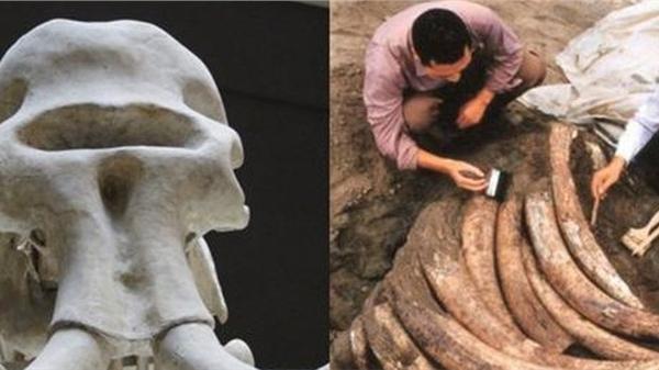 Tìm thấy 1000 ngà voi cổ đại trong lòng đất nhưng đang khai quật thì chuyên gia đột nhiên hét lớn 'Chôn xuống ngay', nguyên do khiến ai cũng há hốc