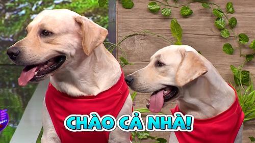 Chú chó Củ Cải và 'cô vợ' Kim Chi khiến Trường Giang và cả trường quay 'phát cuồng'
