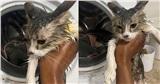 Chui vào máy giặt nằm ngủ, chú mèo bị 'giặt' chung với quần áo đến tơi tả