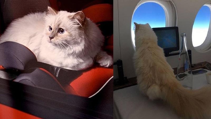 Chú mèo giàu nhất thế giới có cuộc sống vương giả sau khi thừa kế khối tài sản kếch xù từ 'bố già' Chanel