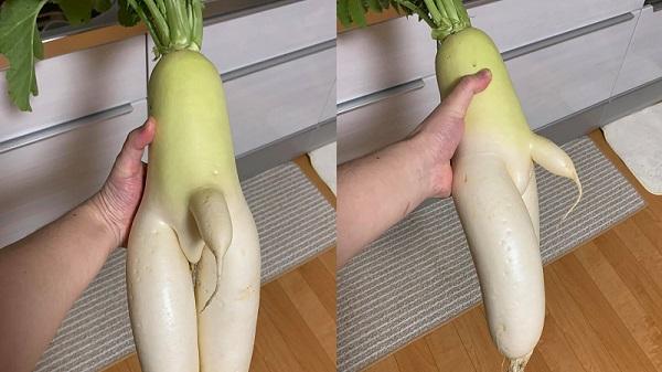 Xuất hiện củ cải trắng có hình dáng nhạy cảm khiến nhiều người 'đỏ mặt'