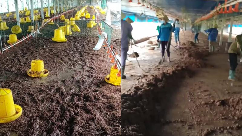 10.000 con gà chết chìm trong lũ, chủ trại ở Nghệ An đau xót: 'Dọn dẹp 3 ngày vẫn chưa xong...'