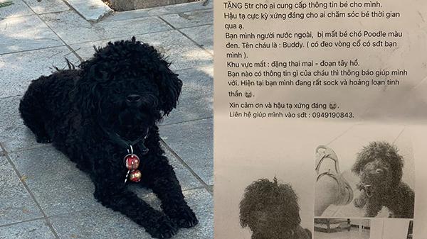 Chú chó 3 tuổi đi lạc, chàng trai đăng bài tìm kiếm kèm hậu tạ 50 triệu đồng