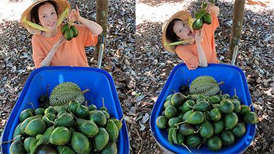 Lý Nhã Kỳ hóa 'cô gái nông thôn' giữa mùa dịch: Đầu đội nón lá, mặc áo thun đi thu hoạch trái cây ở Đà Lạt