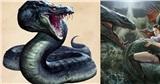 Tìm hiểu về Basilisk: Sinh vật huyền bí đáng sợ nhất thế giới 'Harry Potter'