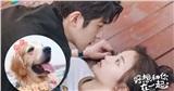'Rất muốn ở bên anh' - Chuyện tình thầy trò ngọt tận tâm can được mai mối nhờ một chú cún