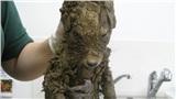 Phát hiện con vật như cún con cứng đơ trong bùn đất, công nhân vội vã mang đến bệnh viện và 'ngã ngửa' khi biết danh tính thật