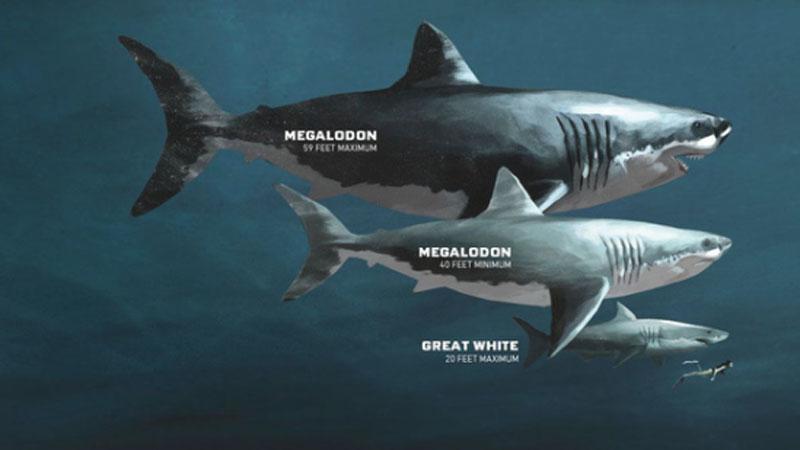 Kích thước chính xác của siêu quái vật Megalodon cuối cùng cũng được xác định