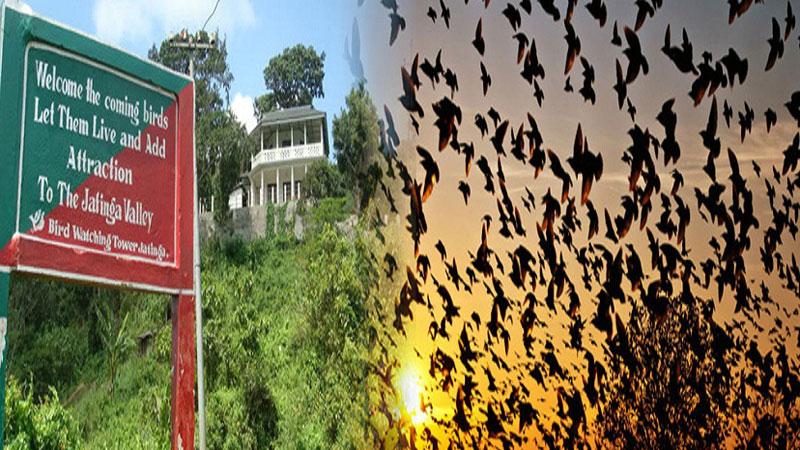 Chuyện rùng rợn về ngôi làng bí ẩn nơi có hàng ngàn con chim bay đến 'tự sát', 100 năm qua vẫn khiến khoa học đau đầu đi tìm lời giải
