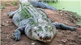 Hốt hoảng phát hiện cá sấu ung dung bơi trong sân vườn