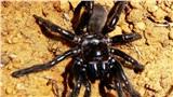 Vừa giật giải thọ nhất thế giới, con nhện 43 năm tuổi lại lăn đùng ra chết vì ong đốt