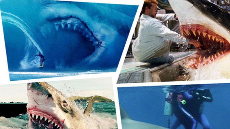 7 người bị cá mập cắn chết trong năm 2020 - kỷ lục suốt gần 100 năm tại Úc bị phá vỡ, lý do phía sau còn khiến chúng ta suy ngẫm nhiều hơn