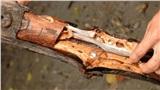 Thanh niên bổ đôi khúc gỗ mục thấy con sâu dài ngoằng liền bỏ vào miệng ăn ngon lành, sự thật khiến nhiều người choáng