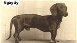 Sự thay đổi về ngoại hình của những chú chó cưng 100 năm trước và hiện tại sẽ khiến bạn bất ngờ đấy