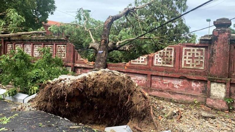 Trường Quốc học Huế bị sập tường rào sau bão