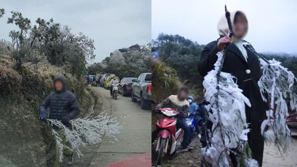 Nhiều người thiếu ý thức 'tiện tay' bẻ những cành cây phủ đầy băng tuyết trên đỉnh Mẫu Sơn mang về 'chơi Tết'