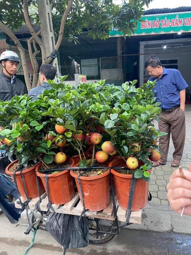 Đẹp, bền, mang ý nghĩa phong thuỷ nên cây táo giả vẫn khá đắt hàng