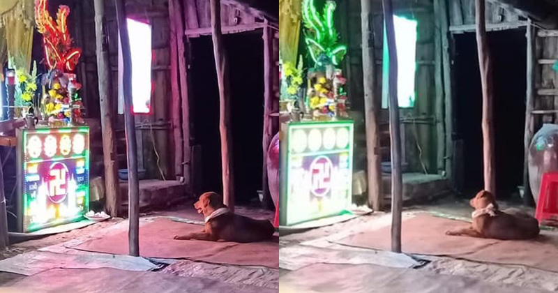 Xúc động chú chó được chủ xả thân bảo vệ đến nỗi chết dưới tay trộm chó: Cả đêm ngồi trước di ảnh chủ không chịu rời đi 0