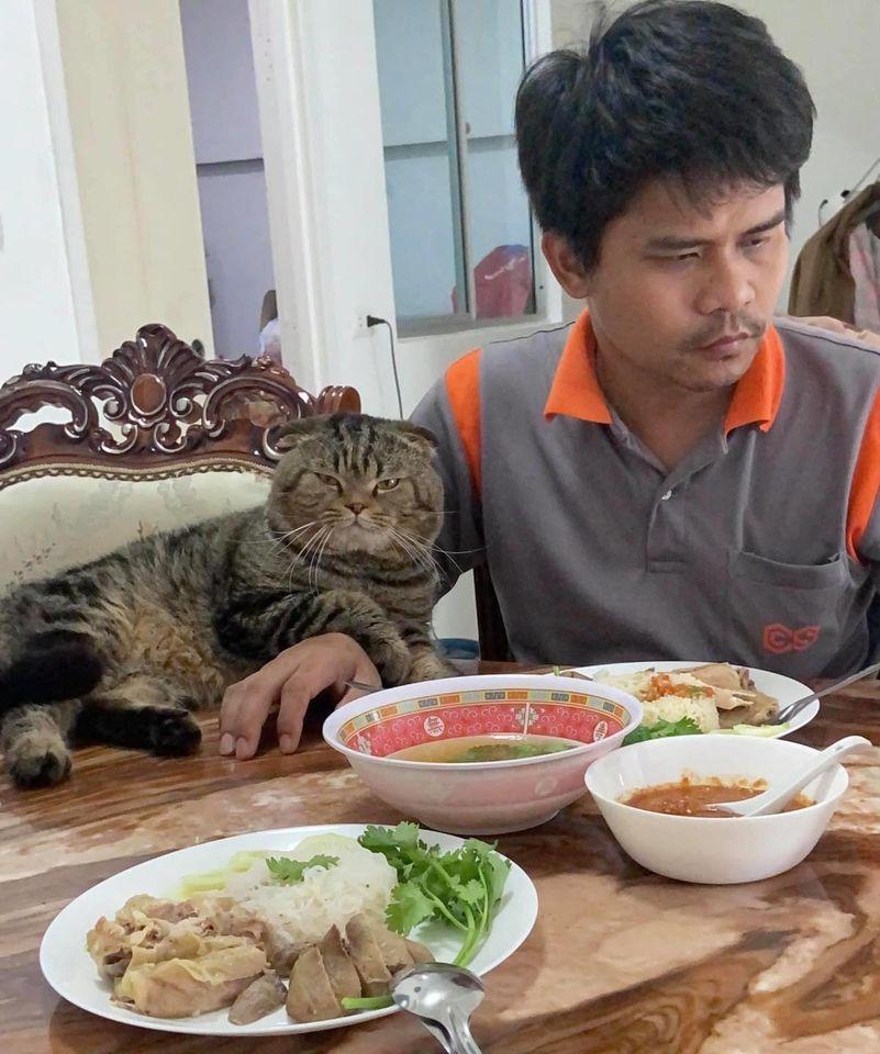 Với anh chồng thì quấn quýt, với chị vợ thì lườm nguýt, chú mèo khiến dân tình sửng sốt thốt lên: Đáng sợ hơn con giáp thứ 13! 3