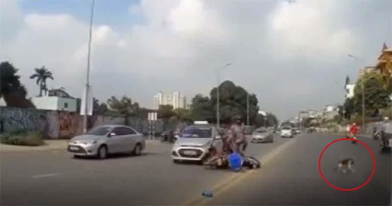 Vụ người đàn ông 'bỏ mặc' bạn gái giữa đường sau tai nạn để cứu chó cưng:  Hé lộ thông tin mới đảo chiều câu chuyện